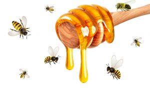 Arı Nasıl Bal Yapar 2