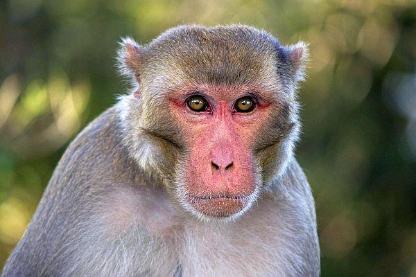 falda maymun görmek