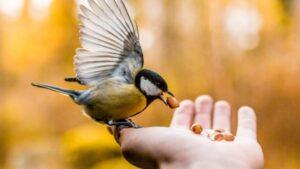 hayvanlara merhamet sözleri